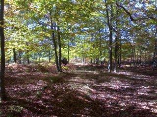 Bosque en Jugatxi