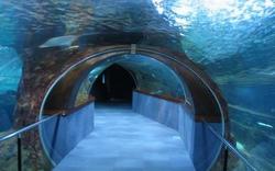 Aquarium de donostia san sebasti n - Aquarium donosti precio ...