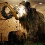 Mamuts en Barcelona