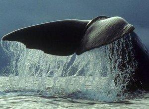 Ver ballenas desde Santurtzi
