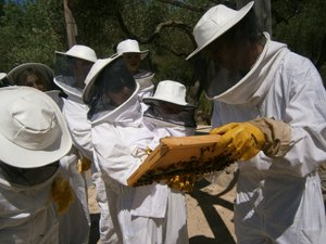 Muria abejas